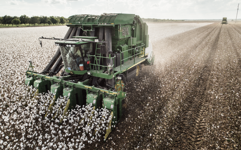 Farm equipment harvesting cotton