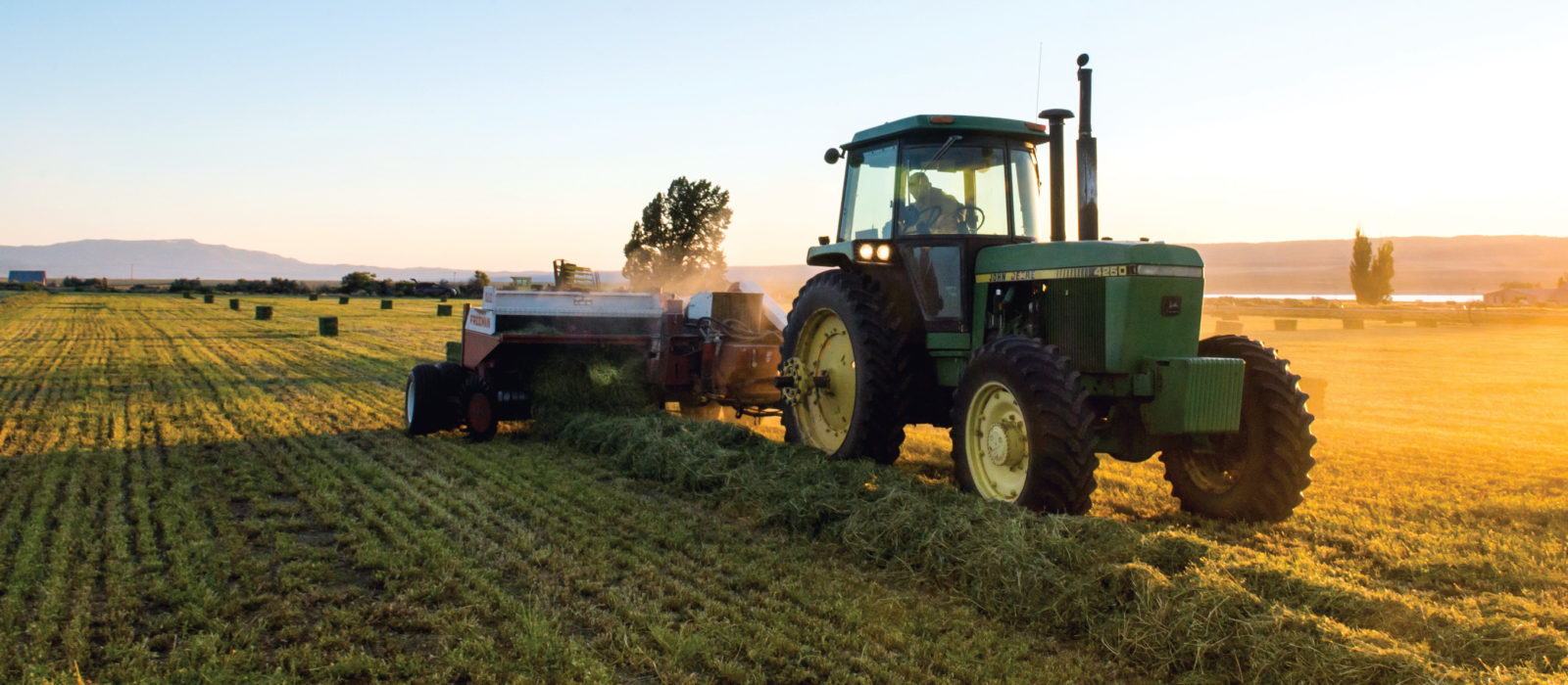 Farmer in tractor harvesting alfalfa