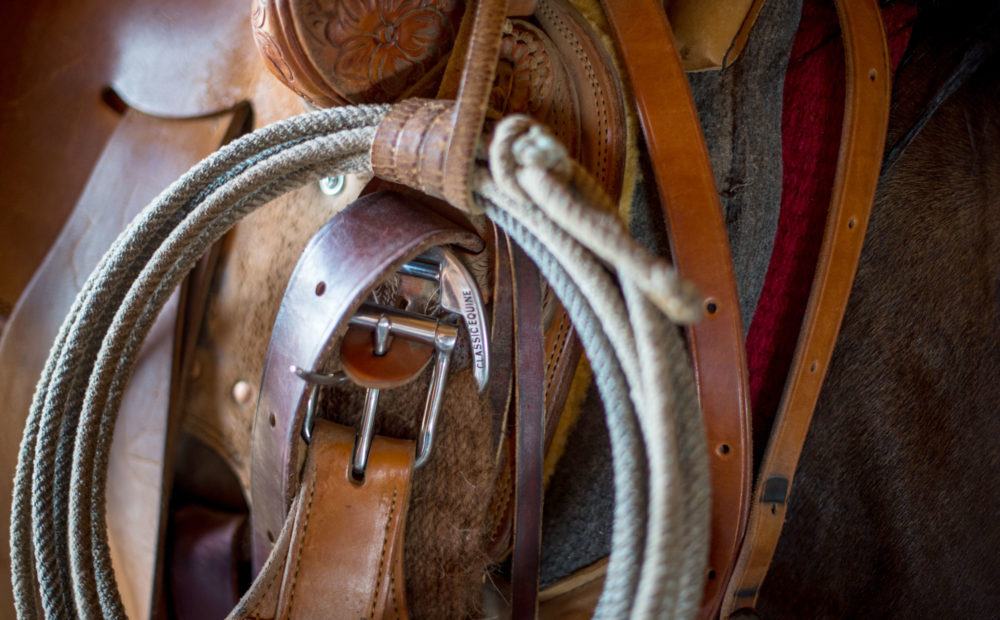 Rope and saddle on a horse