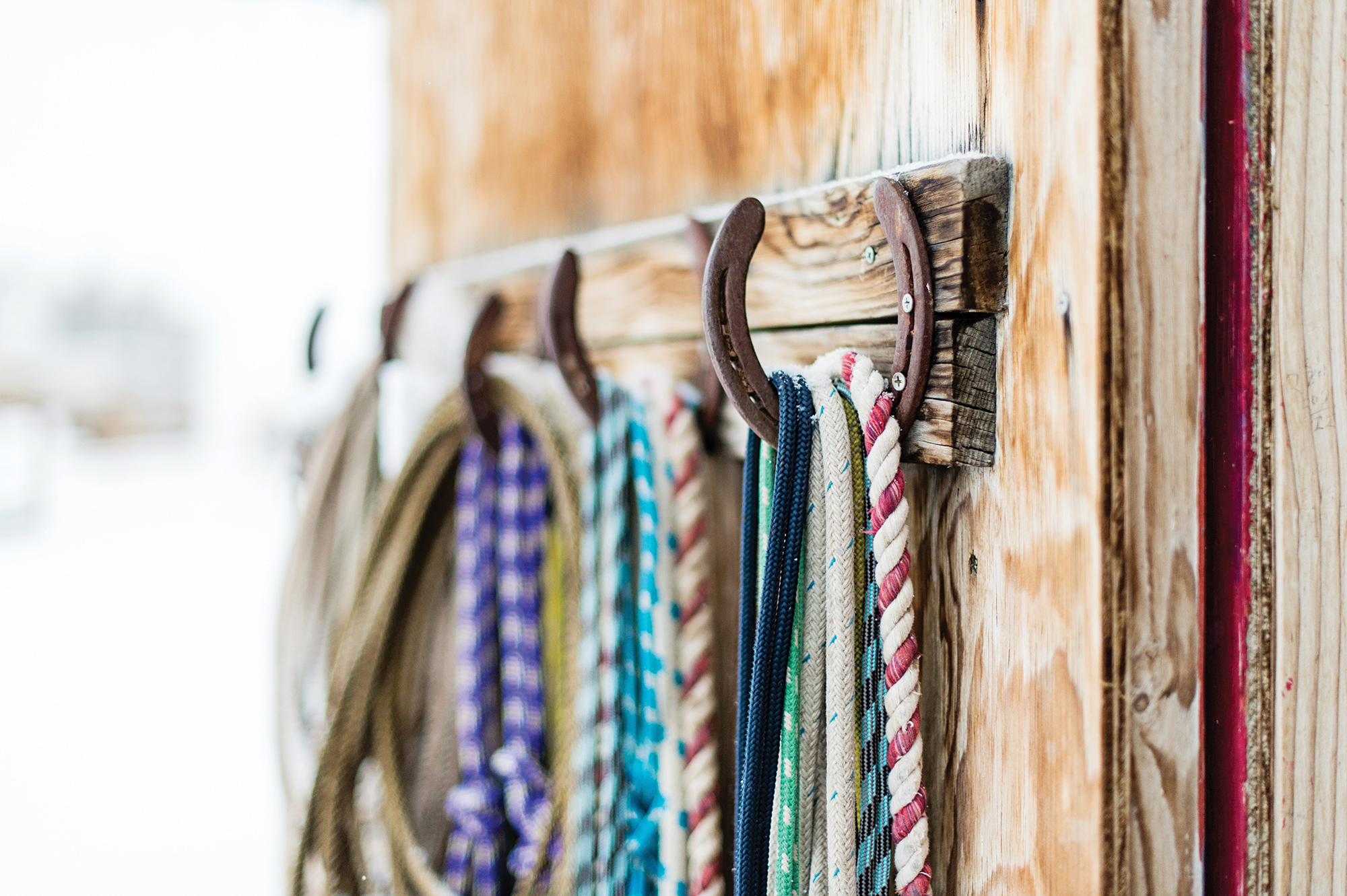 Close up of ropes hanging on horseshoes