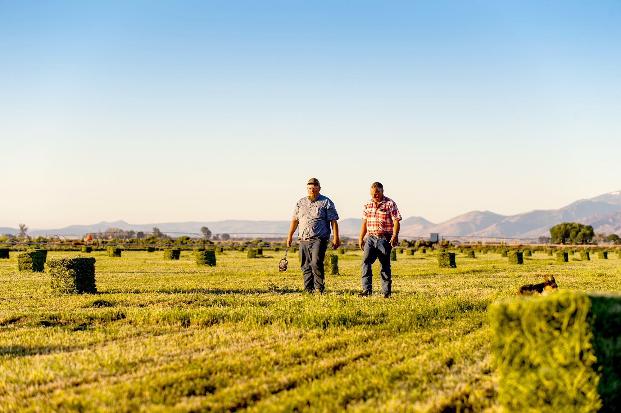 Jon Arreche and his father walking in a field of freshly mowed hay