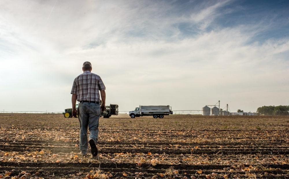 Lynn Fagerberg walking on farmland
