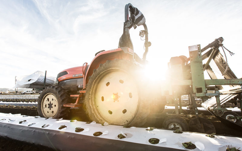 Farmer operating a piece of equipment with a lens flare