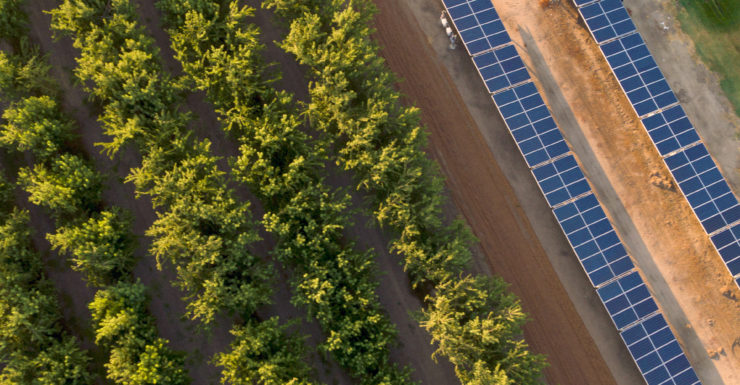 Solar panels next to almond orchard