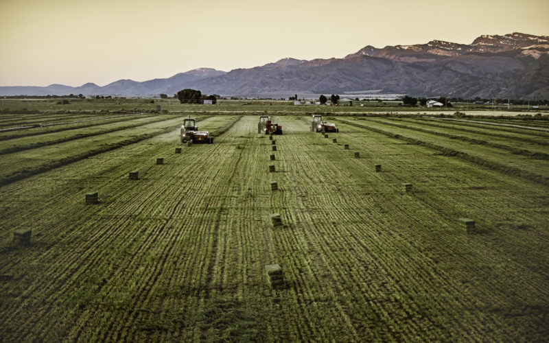 Aerial shot of alfalfa land in Colorado