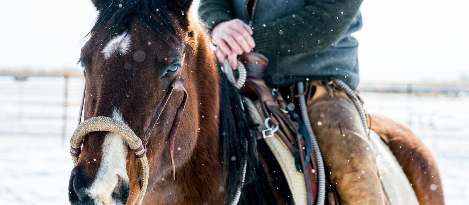 horse in snow with rider