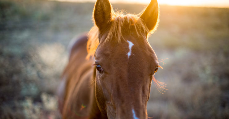 closeup of a brown horse