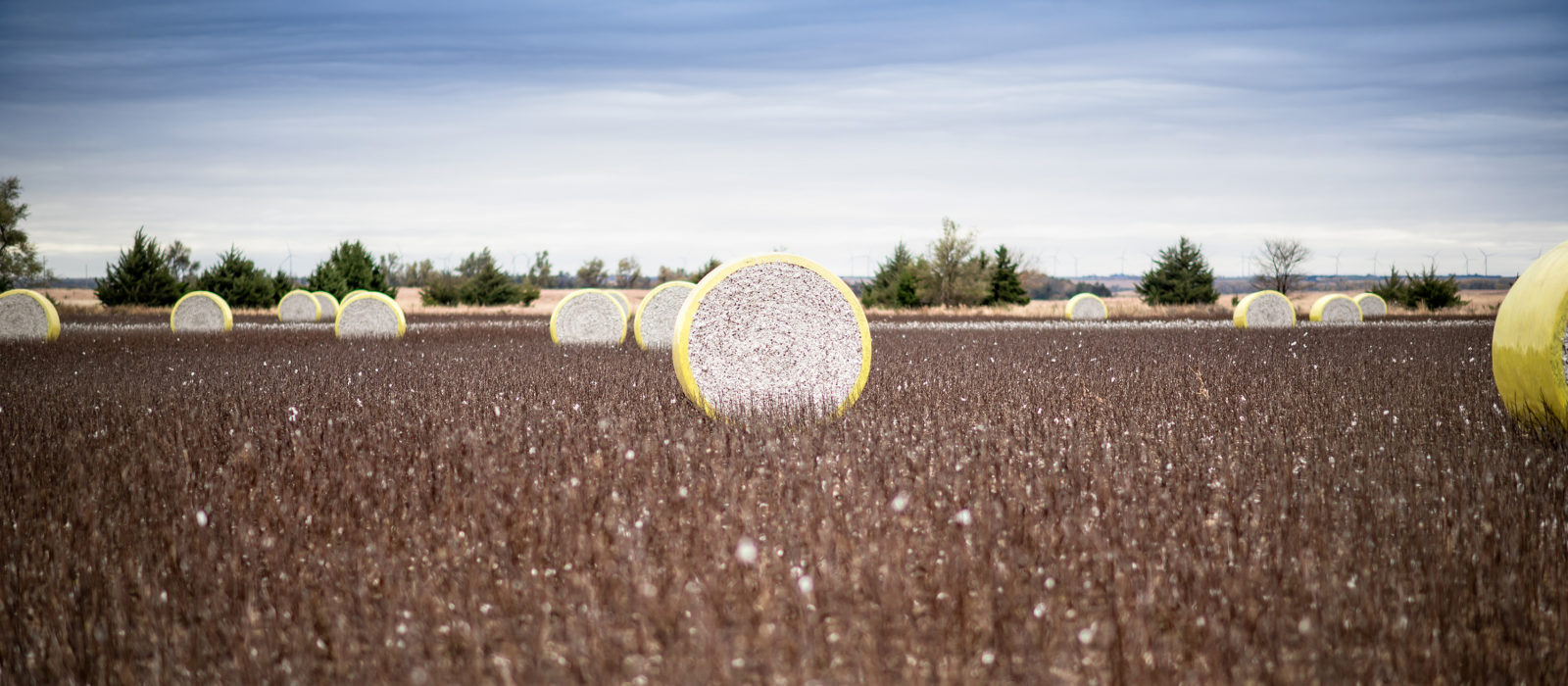 wheels of cotton harvest