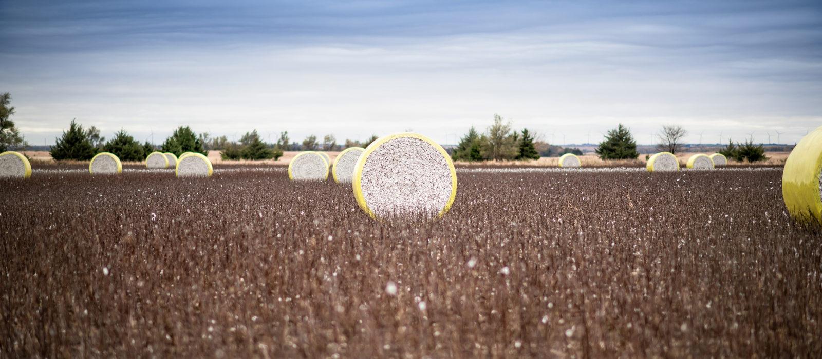 wheels of cotton harvest