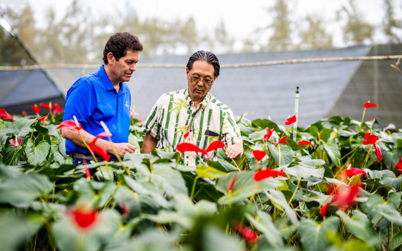 two men looking at tropical nursery plants