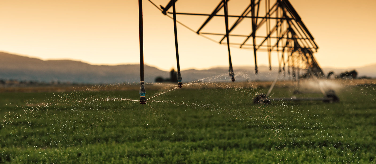 Alfalfa field being watered
