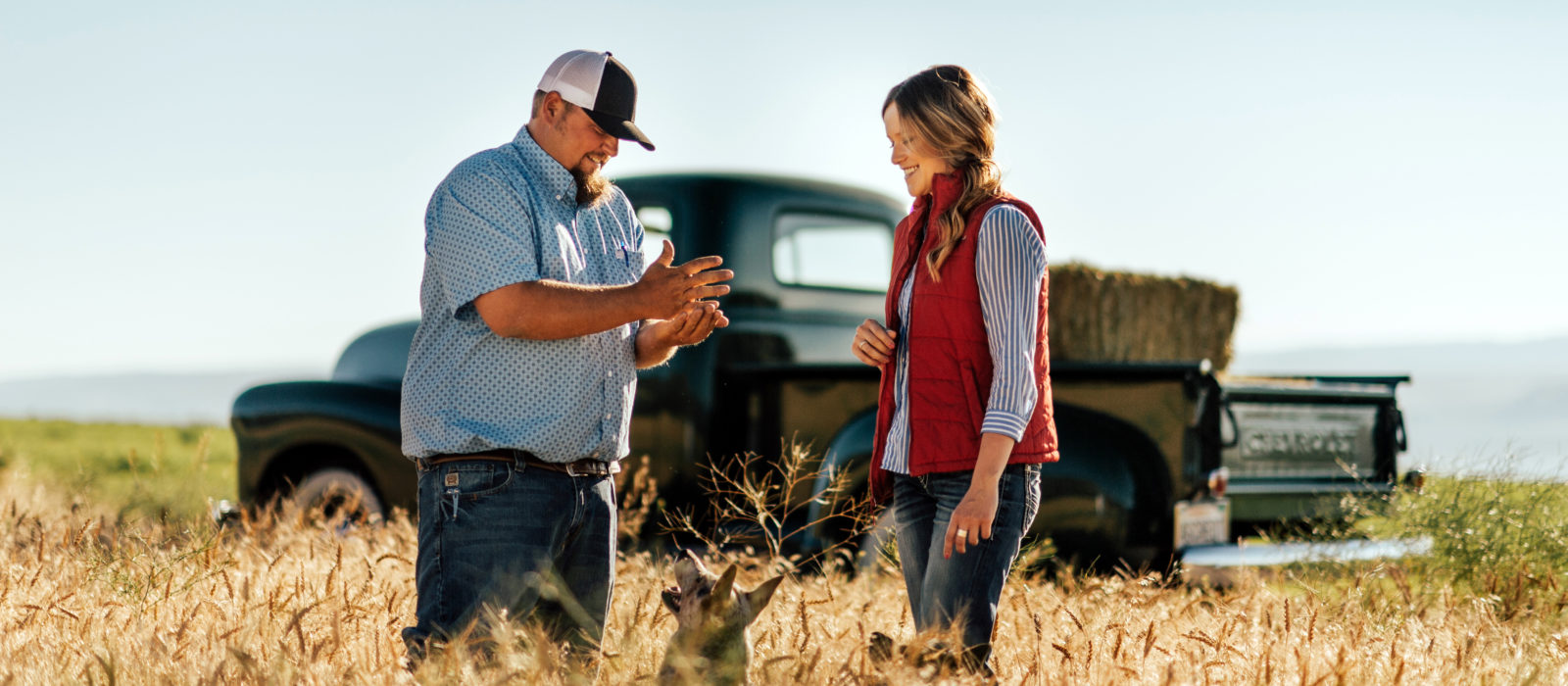 Hay farmers speaking together and two dogs in front of a pickup truck in a field
