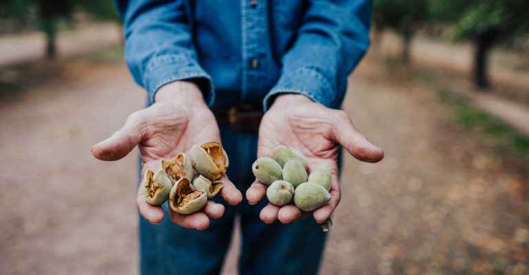 Farmer holding unshelled almonds in his hands