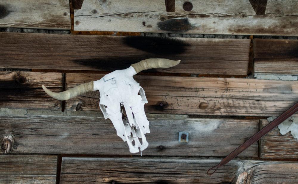 bull skull on old wood wall