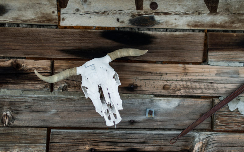 bull skull on old wood wall