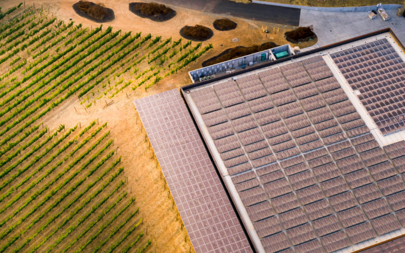 Solar field with vineyard