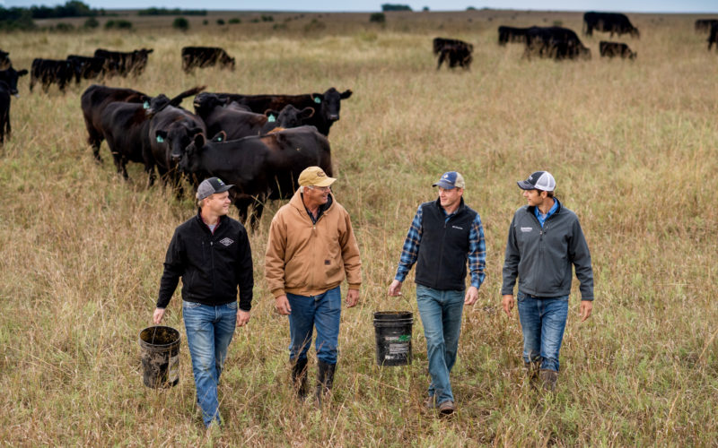 4 men in a field with cattle