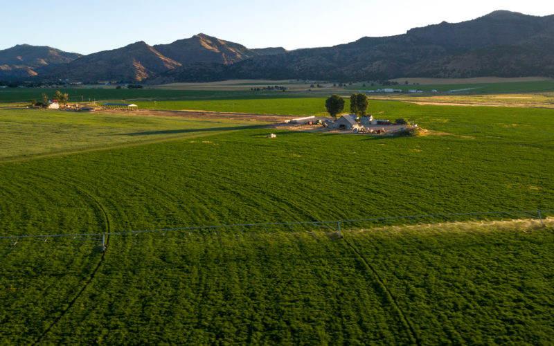 landscape of alfalfa farm with mountains in the background