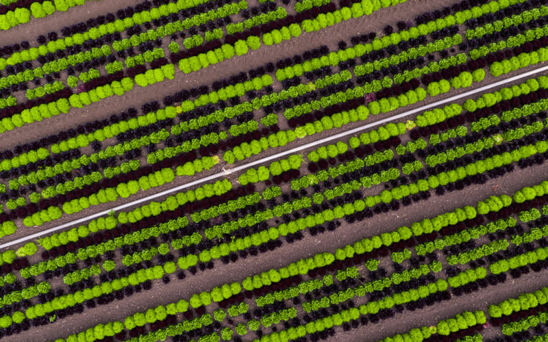 row crops from above
