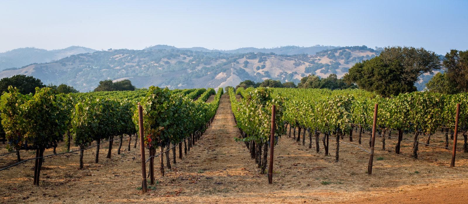 Chappellet Vineyards