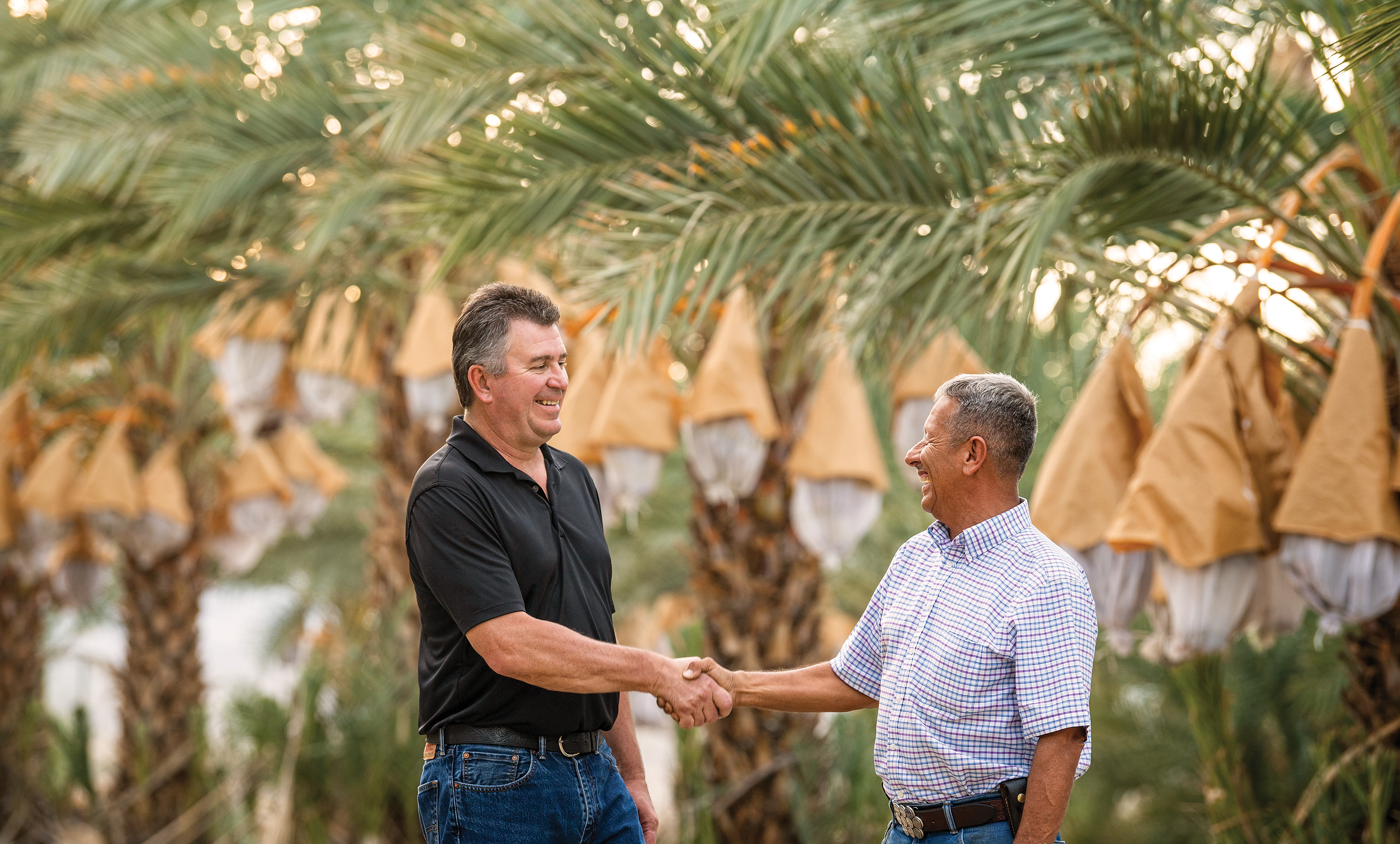 Date palm farmer and lender