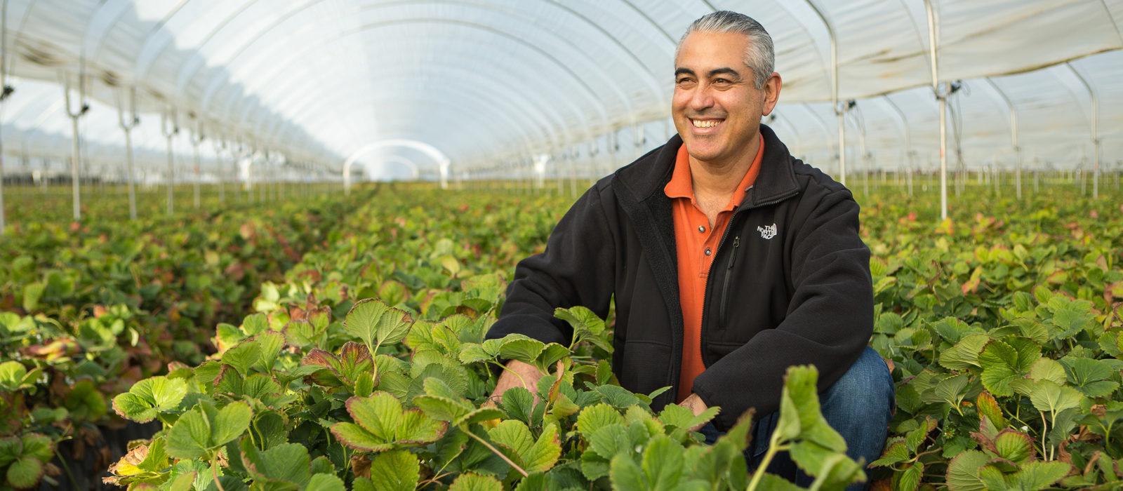 Berry farmer in strawberry field