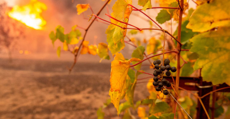 Vineyard Fire and Smoke Taint