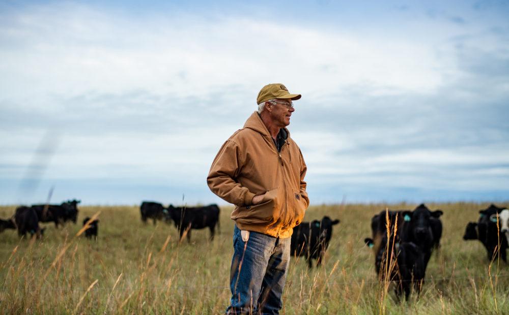Peterson Farm & Cattle, Assaria, Kansas