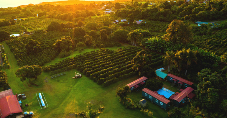 Greenwell Farms from above