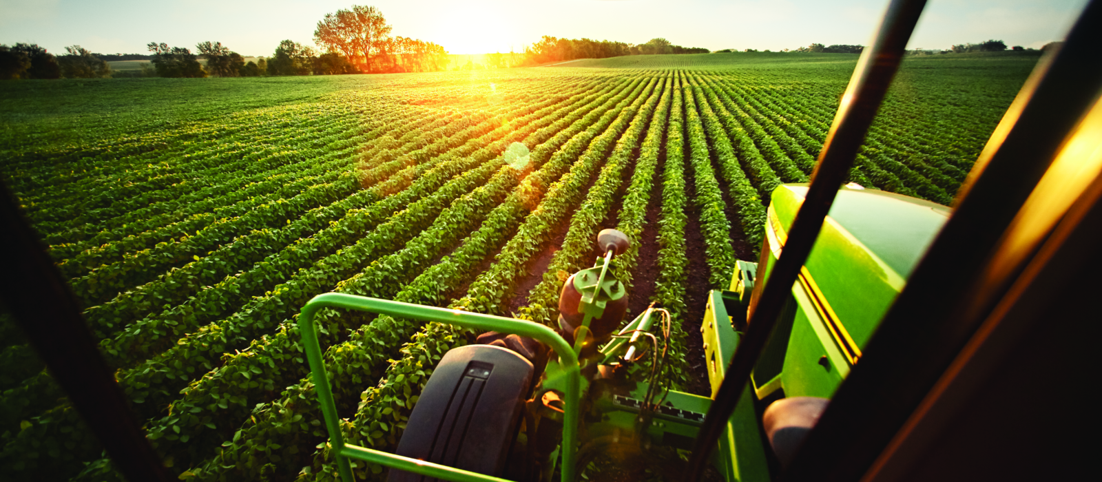 Tractor in field of soybeans at sunset